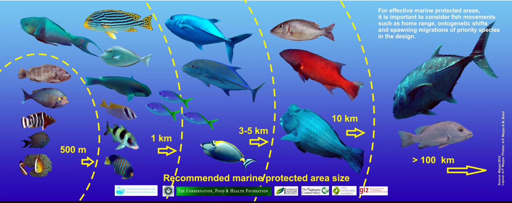Poster – Fish Movements