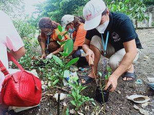 Ocean's Eventual Betterment Through Mangrove Nursery Establishment