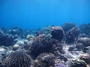 Sumilon Marine Sanctuary Shortlisted for the Para El Mar MPA Awards